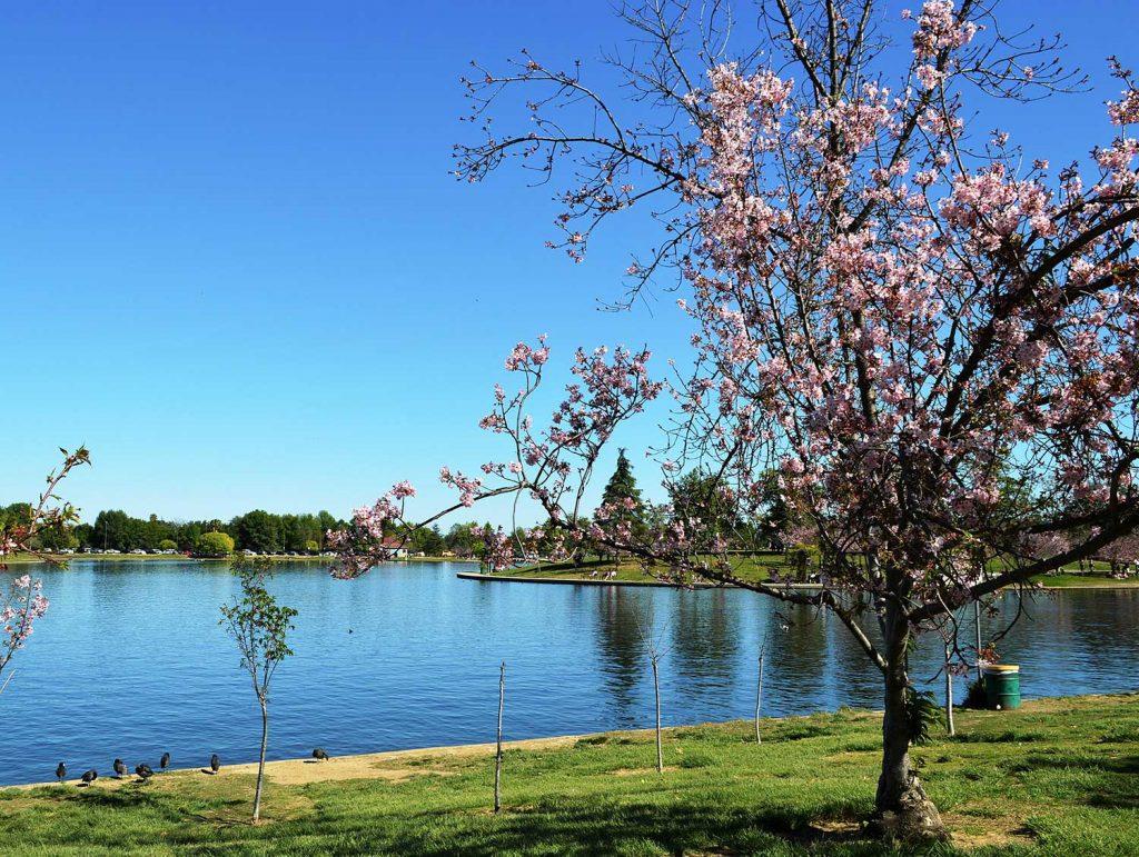 lake balboa picnic spot